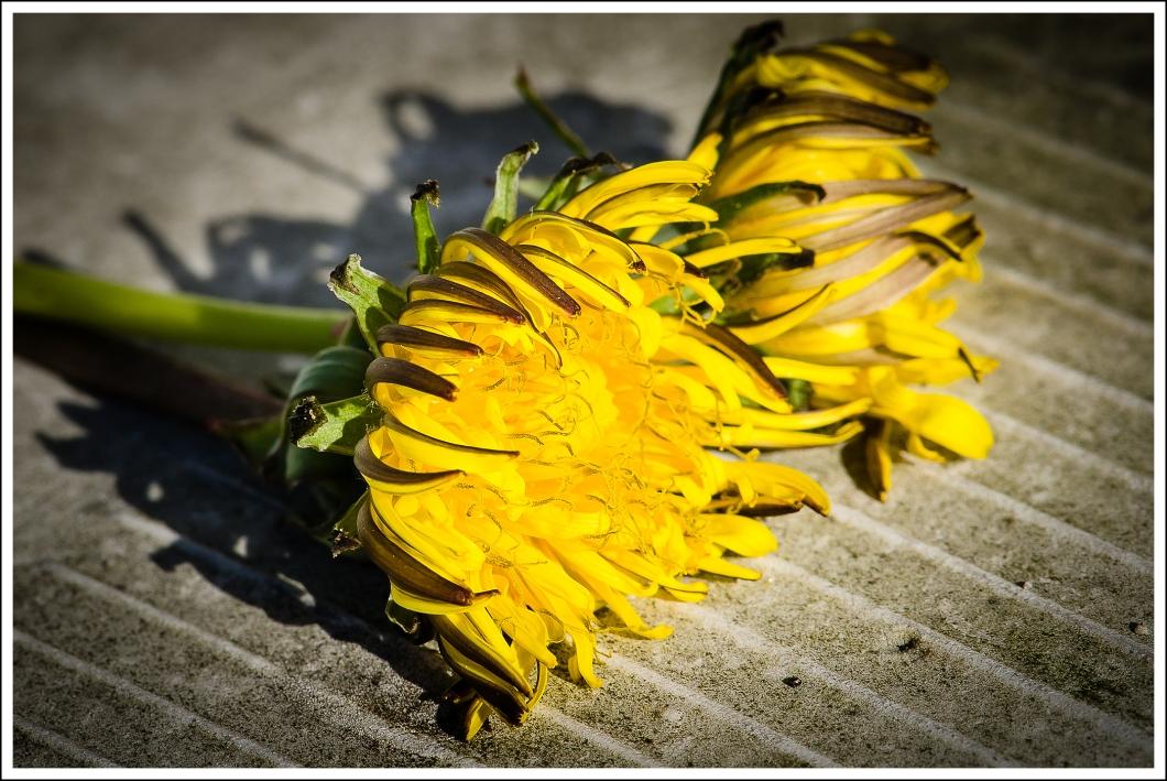 Flores muertas-2