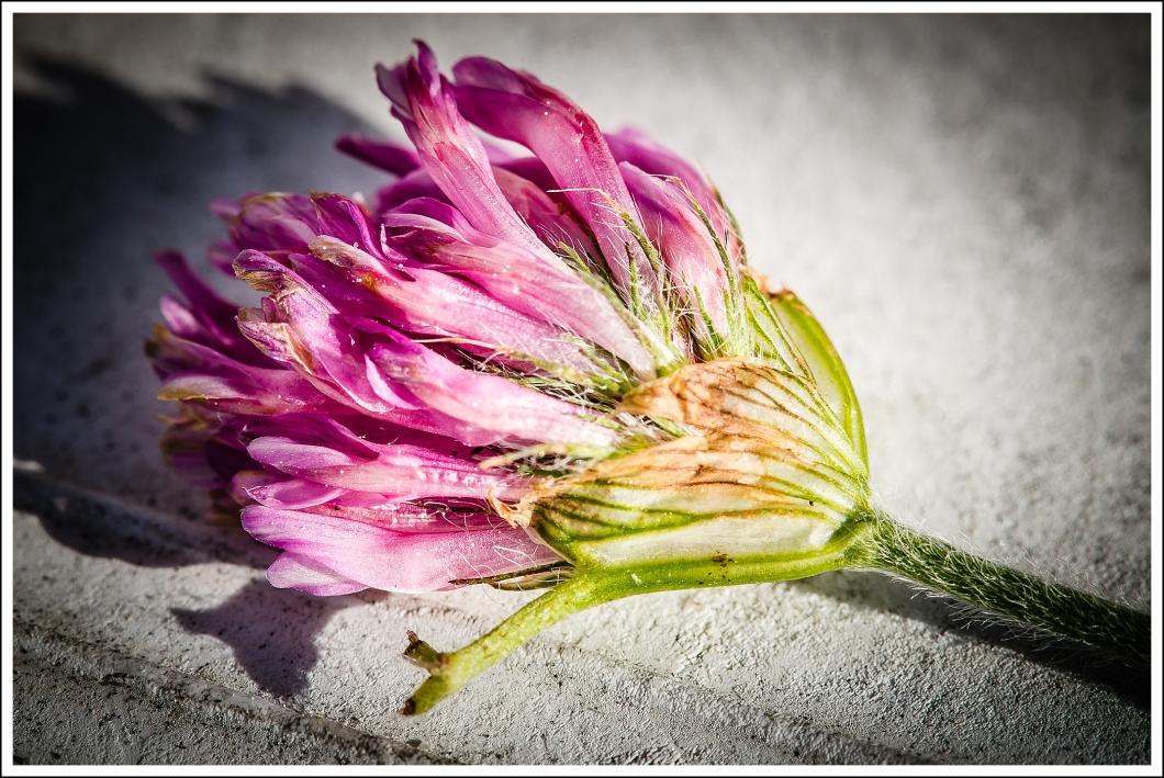 Flores muertas-3